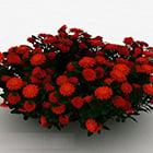 赤いデイジーの装飾用の花