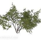 Krzewy okrągłe o małych liściach