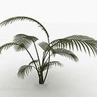 Tall Fern Plant