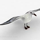 白い鳩動物