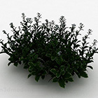 White Small Garden Forest Plant