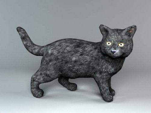 Black Wild Cat