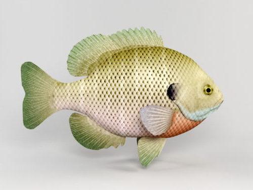 Sea Bluegill Fish