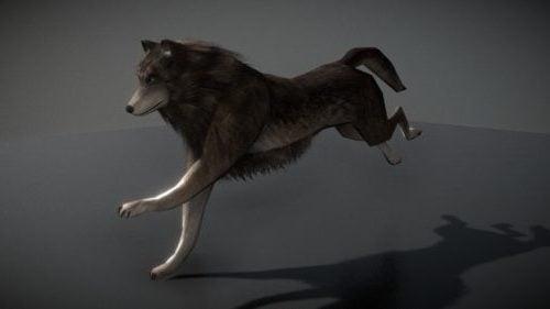 Lobo animado