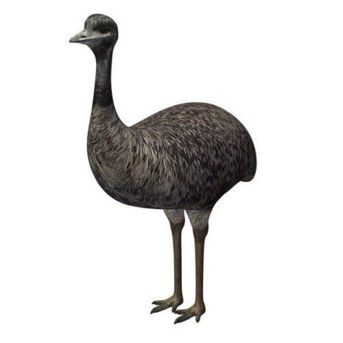 Strutsi lintu