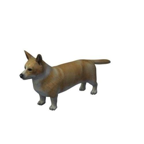 كلب كارديجان كارديجان ويلز