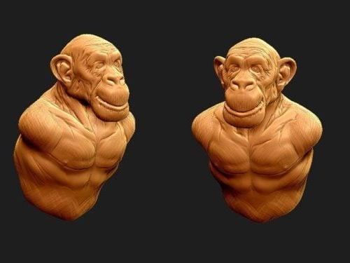 تمثال شمبانزي للرأس