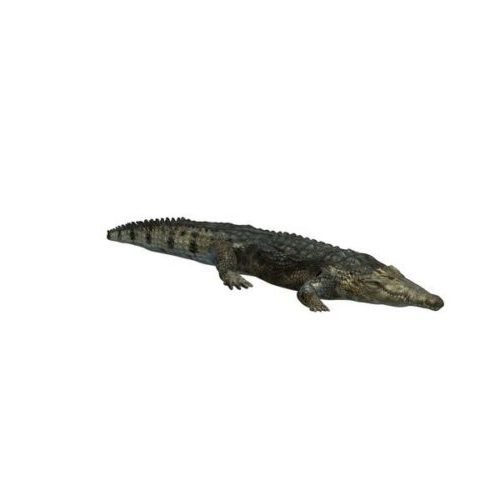Krokotiili Lowpoly