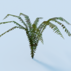 Fern Garden Plant