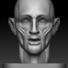 Mand hoved anatomi
