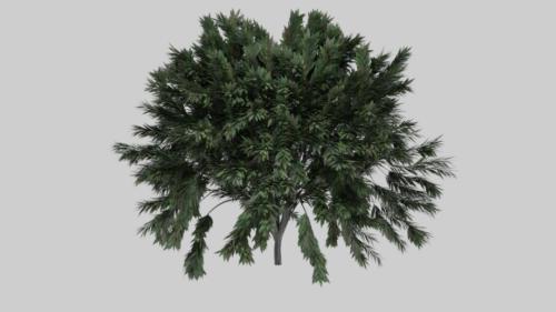 واقعية شجرة الشجيرات
