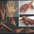Human Hands With Rigged