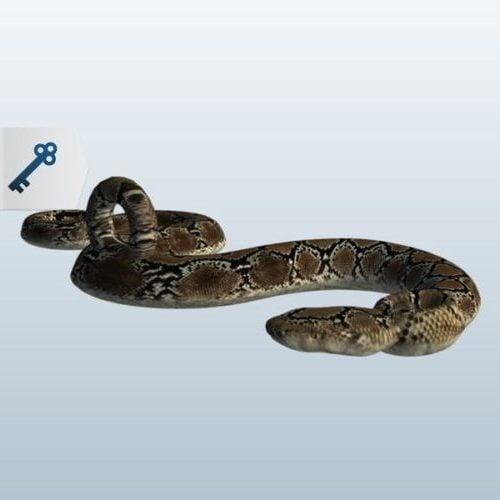 Luonto käärme