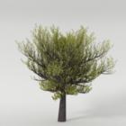 प्रकृति वसंत वृक्ष