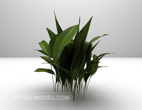 Indoor Potted Plant Big Leaf