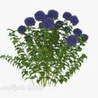 Krzewy Roślin Niebieskich Kwiatów