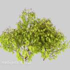 Kampfer Schössling Baum