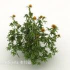 Krzewy kwiatowe chryzantemy