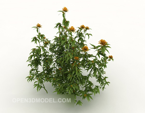 Chrysanthemum Flower Bushes