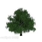 شجرة سحابة الصنوبر