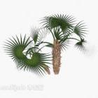 Iglasta zielona roślina