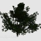 Grand arbre vert de la cour
