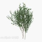緑の苗木を栽培する