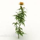 Odlade växter