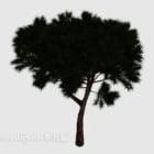 Dvärg Pine Tree Nature