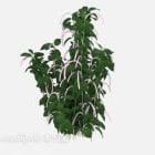 注目の屋外植物