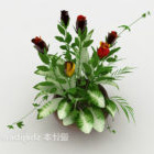 Blommande krukväxt