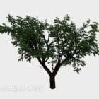 Grünes Pflanzenbaum-breites Blatt