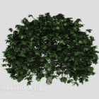 Green Outdoor Potted Plant Tree