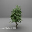 Grünes Baum breites Blatt