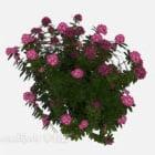 نبات زهرة الأزهار في الهواء الطلق بوش