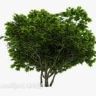 Outdoor Plant Tree Breites Blatt