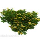 Grön växt för utomhusodling