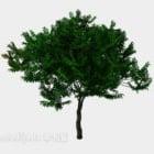 Breites Blatt des grünen Baumes im Freien