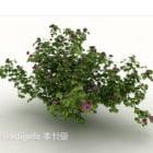 Grüne Wildblumen-Unkräuter im Freien