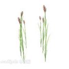 Udendørs Wildflower Weed Plant