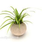 نبات بوعاء على الطراز الرعوي