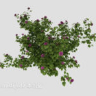Outdoor-Pflanze Blumenbusch