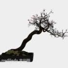 شجرة بونساي البرقوق