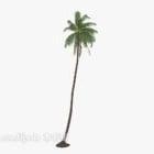 Coconut Tree Plant