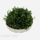 Topf kleine Pflanze Bush