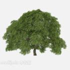 Gartenpflanze Baum breites Blatt