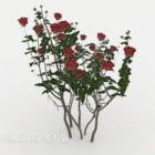 Rosenbuschpflanze