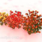 Krzewy Kwiat Róży