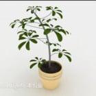 Plante en pot Cour simple