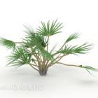 Plan małego drzewa iglastego